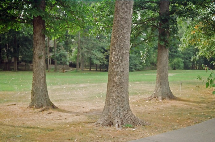 Golf course trees