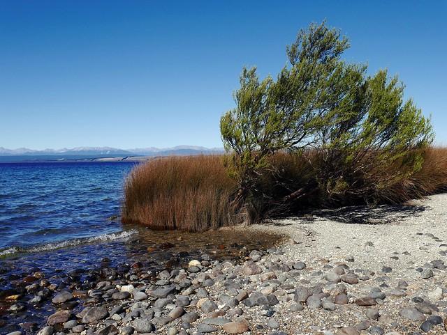 The Windy Shore