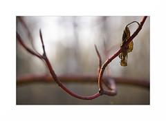 Strange red branch