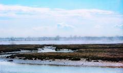 Fading Marsh Fog