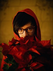 Poinsettias
