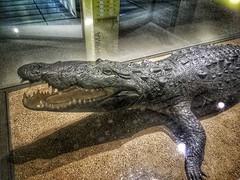 See ya latah, alligatah (or was this the crocodile? 😂)