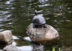 Turtle Power...