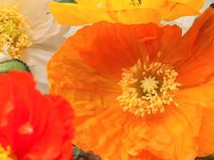 Natuur, bloemen n5