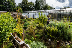 Potager Urbain #09 Jardin des Semeurs (ULB)