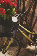 """A bike.. • <a style=""""font-size:0.8em;"""" href=""""http://www.flickr.com/photos/77313440@N04/48672078646/"""" target=""""_blank"""">View on Flickr</a>"""