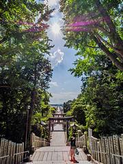 宮地嶽神社光の道