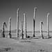 dead palms. mojave desert, ca. 2014.