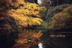 Benmore Garden, Scotland