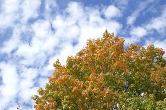 Autumn Colors With Clouds