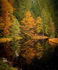 Lac Lispach, Vosges
