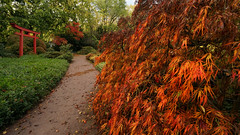 Karlsruhe Japanese Garden