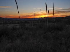 Sunrise, Big Bend National Park