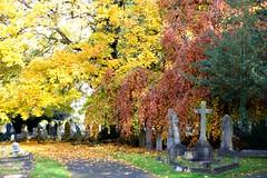 Teddington Cemetery: autumn colours