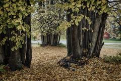 Autumn at Hove 3