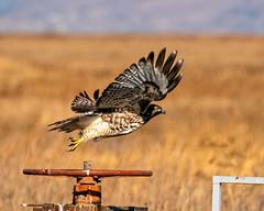 Hawk Liftoff 27