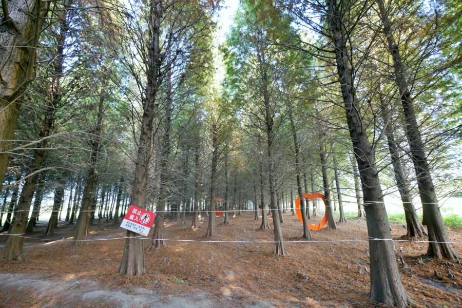 [八德景點]八德落羽松森林|霄裡大池附近冬季限定景點‧宛如置身國外的美麗場景 @VIVIYU小世界