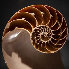 Fibonacci vs. Nautilus