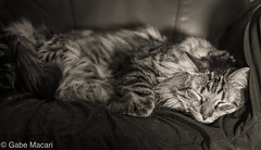Sleepy Saturday Morning
