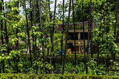 Potager Urbain / #01 Parc Tournay Solvay / Mai 2019