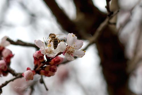 Tavasz Virágok Spring Flowers