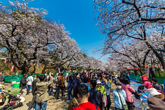 Ueno Park (April 2017)