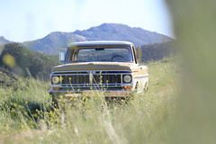 ICON_Ford_Reformer_Nose_through_Flowers_Mountains_IMG_1687