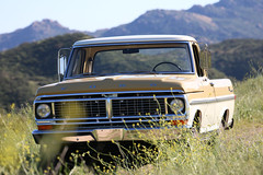 ICON_Ford_Reformer_Nose_through_Flowers_Mountains_ALT_IMG_1683