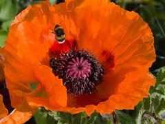 Abflug / leaving the flower