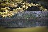 Photo:Hikone castle By