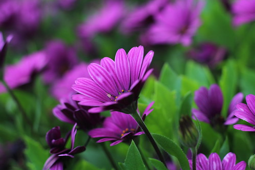 """Purple flowers - Remagen, Germany • <a style=""""font-size:0.8em;"""" href=""""http://www.flickr.com/photos/104409572@N02/50215306933/"""" target=""""_blank"""">View on Flickr</a>"""