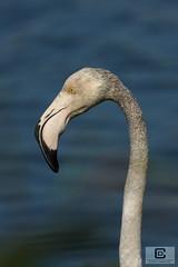 Saintes Maries de la Mer : Parc ornithologique du Pont de Gau