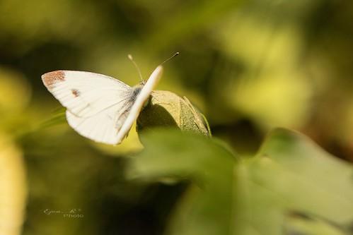 autumn butterfly ősz lepke