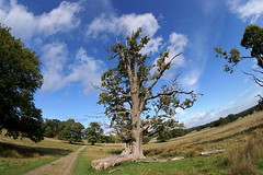 Today's walk in ultra wide angle