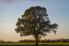 'An October Evening in Norfolk' 3