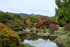 Autumnal pond view