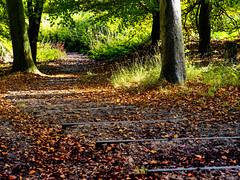 Autumn colours in Little Wittenham Wood