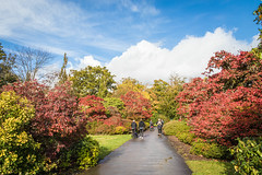 Autumn at Exbury Gardens-2809.jpg