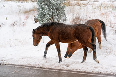 Lincoln County New Mexico Wild Horses