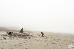 September on the Beach, North Oregon Coast
