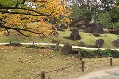 岩と松と紅葉の調和 Harmony of rocks, pine trees and autumn leaves
