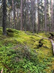 Patvinsuo National Park