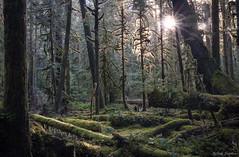 Land of moss