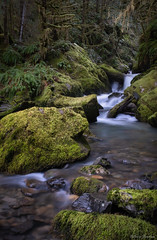 A stream in Mirkwood