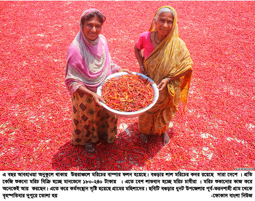 01-04-21-Bogra_ Red Pepper-3