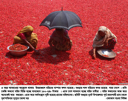 01-04-21-Bogra_ Red Pepper-2