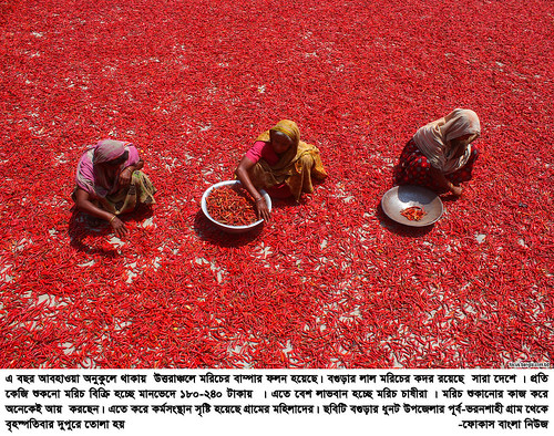 01-04-21-Bogra_ Red Pepper-8