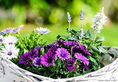 Gartenblumen im Korb