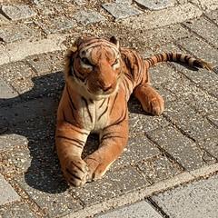 Clapham Zoo