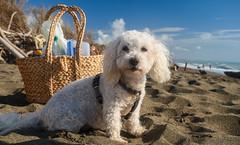 Bella macht Strandurlaub